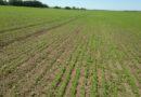 Поддержка выращивания льна и конопли         Рубрика: Субсидии