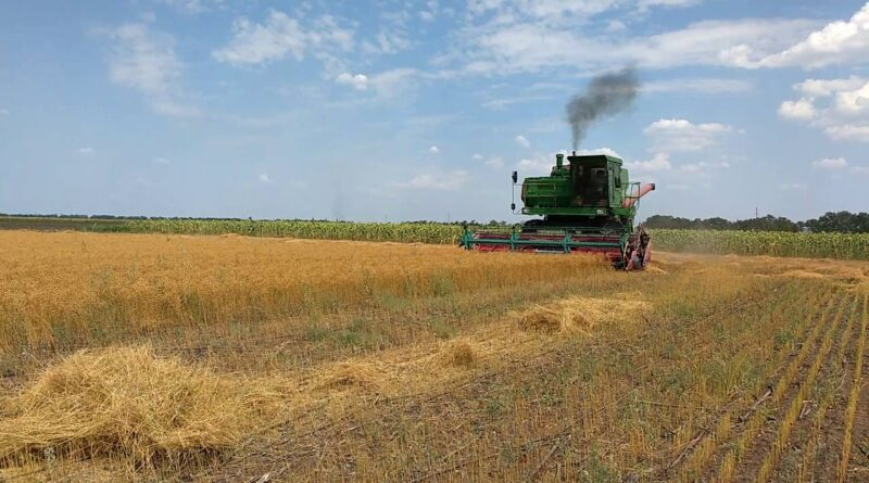 В Ставропольском крае завершается уборка льна масличного